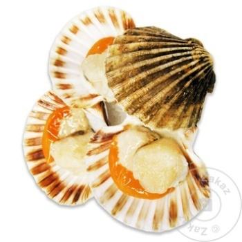 Морские раковины Сеинт Жак - купить, цены на Метро - фото 2