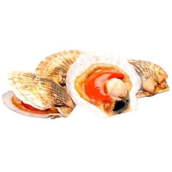 Морские раковины Сеинт Жак - купить, цены на Метро - фото 1